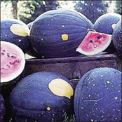 Moonstarmelon