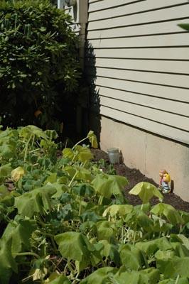 Pumpkinpatchlater