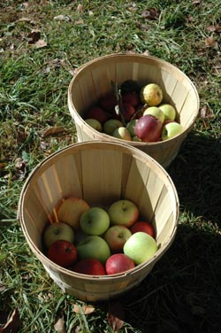 Applebaskets